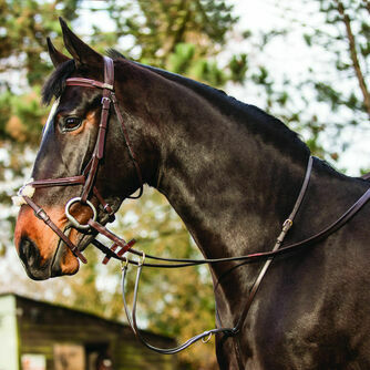 Horse Martingales & Breastplates