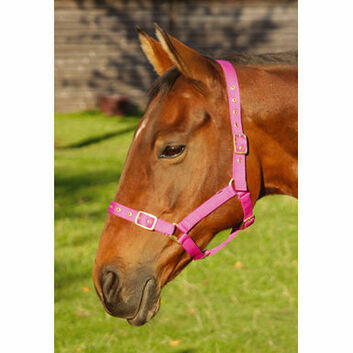 JHL Headcollar Orion - Pony