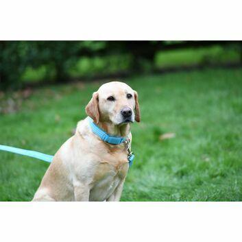 Woofmasta AW18 Dog Collar Hi-Viz Flashing Aqua