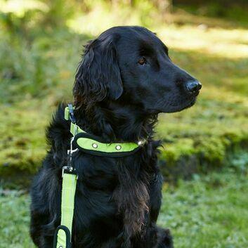 Woofmasta AW18 Dog Collar Hi-Viz Flashing Fluorescent Yellow