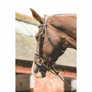Mark Todd Bridle Performance Flash with Brass Fittings