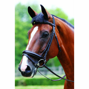 Mark Todd Bridle Performance Flash Patent Piped - Cob