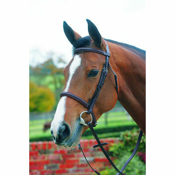 Mark Todd Bridle Plain Raised with Cavesson Noseband - Cob