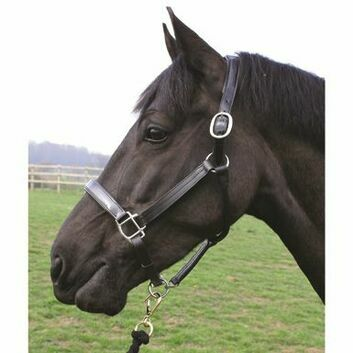 Mark Todd Headcollar Patent Leather Black