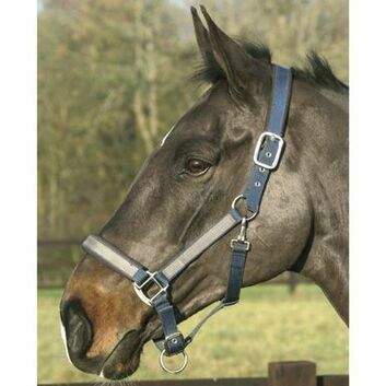 Mark Todd Headcollar Padded - Full - NAVY/GREY