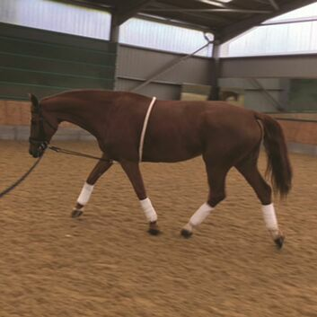 Mark Todd Lunging Aid Cream - FULL