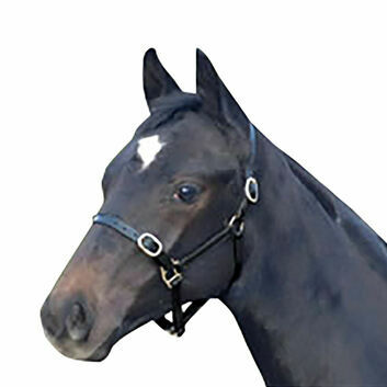 Cottage Craft Headcollar Leather - Foal