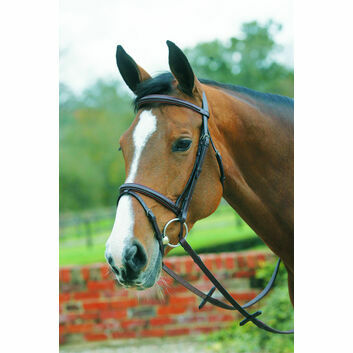 Mark Todd Bridle Padded Square Raised with Flash Noseband Havana