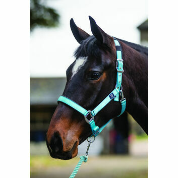 Mark Todd Headcollar Deluxe Padded With Lead Rope Aqua