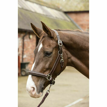Mark Todd Headcollar Leather Raised Fancy Stitch Havana