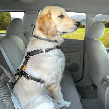 Kurgo Tru-Fit Smart Harness C/W Seatbelt Tether Black