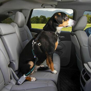 Kurgo Direct To Seatbelt Swivel Tether Blue