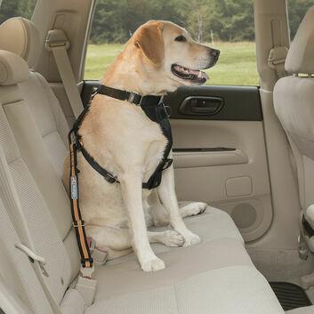 Kurgo Direct To Seatbelt Tether Black/Orange