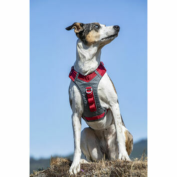 Kurgo Journey Air Harness Red