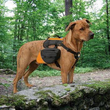 Kurgo Big Baxter Backpack Black/Orange