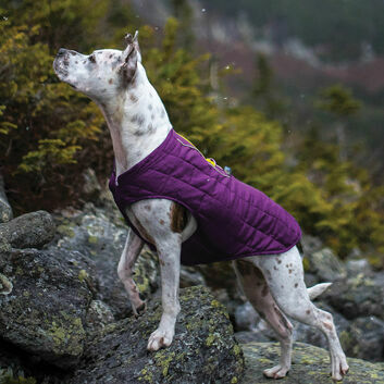 Kurgo Loft Jacket Deep Violet/Grey