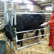 Ritchie Calving Gate additional 1