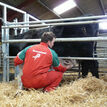 Ritchie Calving Gate additional 2