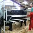 Ritchie Calving Gate additional 3