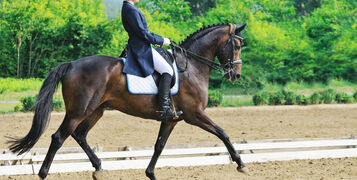 A Beginners Guide to Dressage