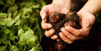 How To Start An Organic Crop Farm