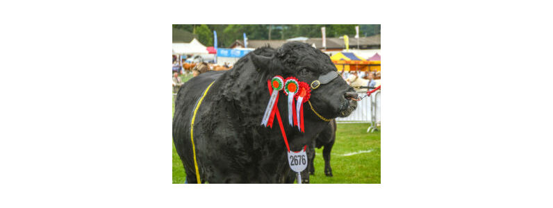 Top Tips for Showing your Livestock